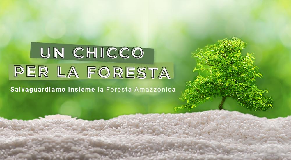 Immagine_Progetto_green_Foresta_1000x550